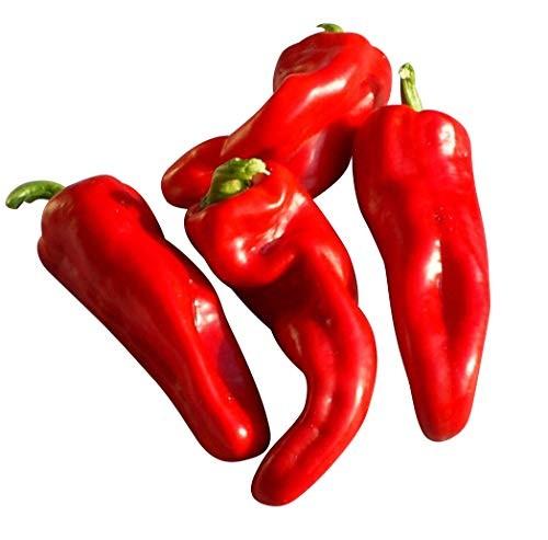 Paprika -Dulce de Espana- 10 Samen