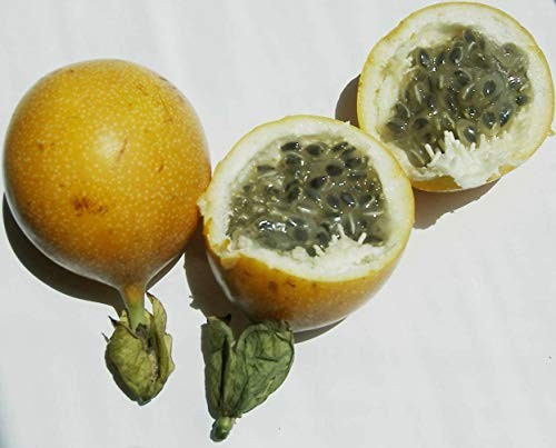 Süße Granadilla -Passiflora ligularis- 10 Samen