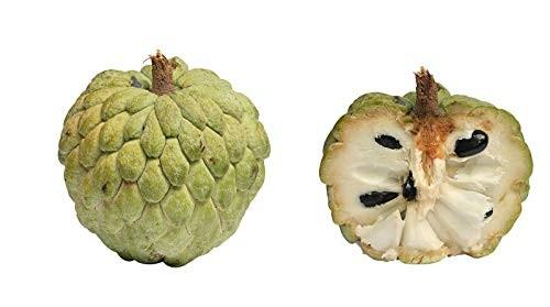 Zimtapfel -annona squamosa- 10 Samen