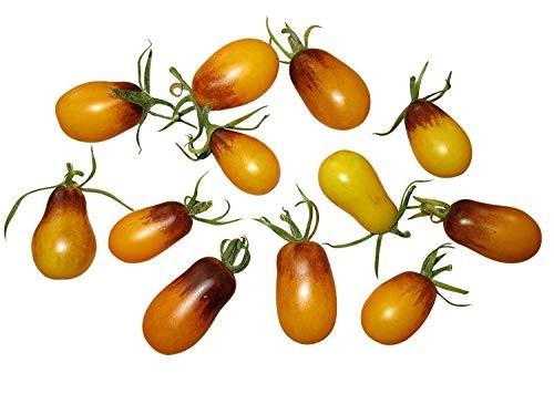 Tomate -Indigo Pear Drops- 10 Samen