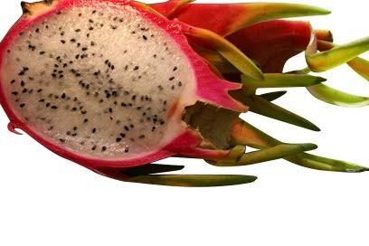 Pitahaya Drachenfrucht -Hylocereus undatus- 1000 Samen