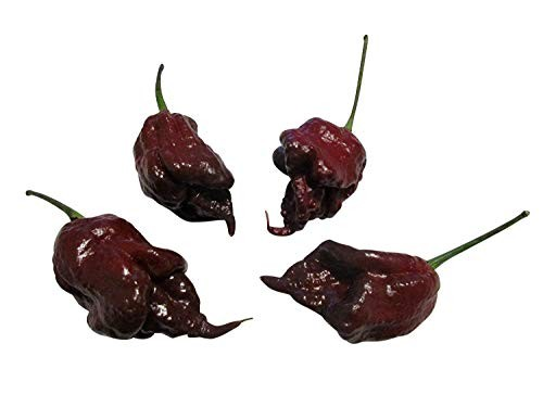 Carolina Reaper Black 5 Samen