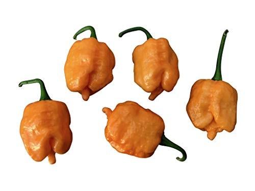 Bubblegum 7 Pot (BBG7) X SRTSL Orange (No Calyx) 10 Samen