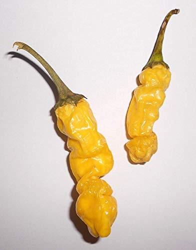 Peter Pepper Gelb 10 Samen