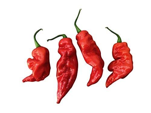Red Brazilian Ghost Pepper 10 Samen