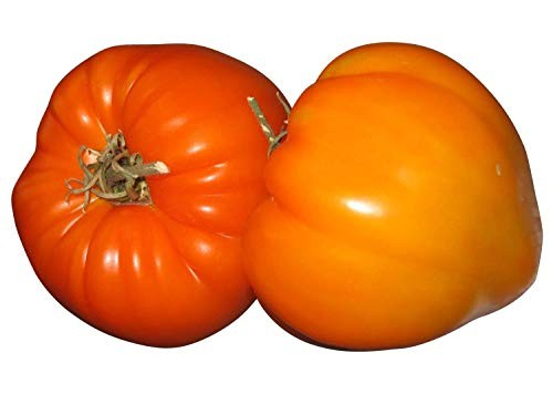 Orange Erdbeertomate 10 Samen