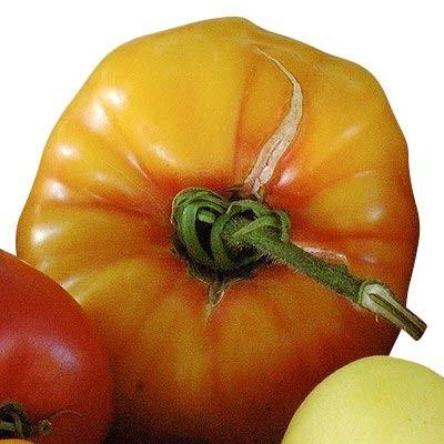Tomate -Old German- 10 Samen