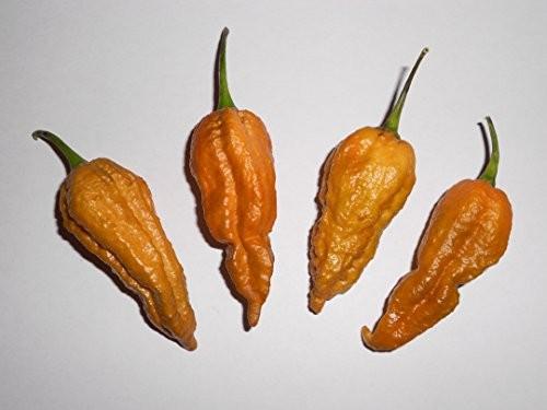 Bhut Jolokia Mustard 10 Samen