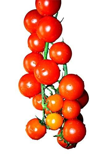 Tomate Red Cherry 100 Samen