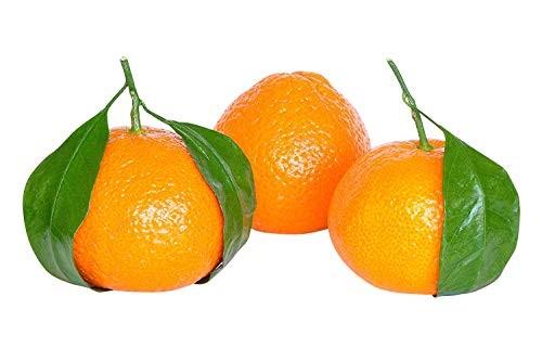 Mandarine -Citrus reticulata- 4 Samen