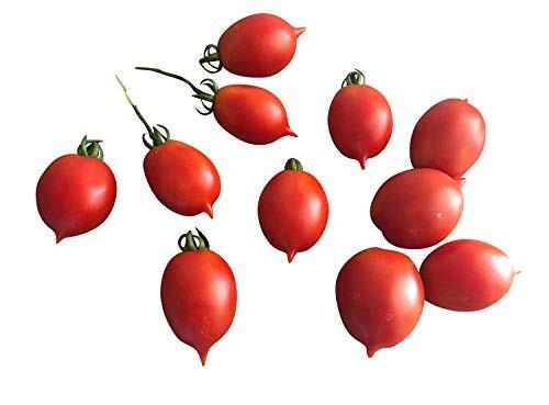 Venusbrüstchen 10 Samen