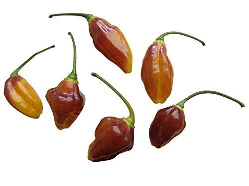 Chili -Bolivian Bumpy- 10 Samen