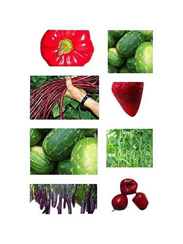 Gigantische/s Gemüse/Früchte -Saatgut-Set- - 160 Samen -