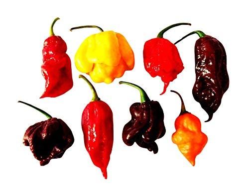Chili Sortiment -Teufelsschärfe- 7 Sorten