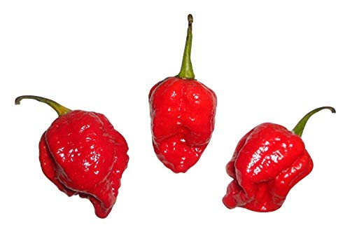 "7 Pot INFINITY Chili 10 Samen""Ultrascharfe/Seltene Chili_*Schärfer als Bhut Jolokia*_"