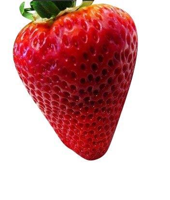 Riesen Erdbeere -f. maxima- 40 Samen