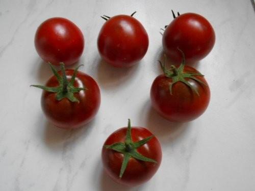 Schoko Tomate 10 Samen