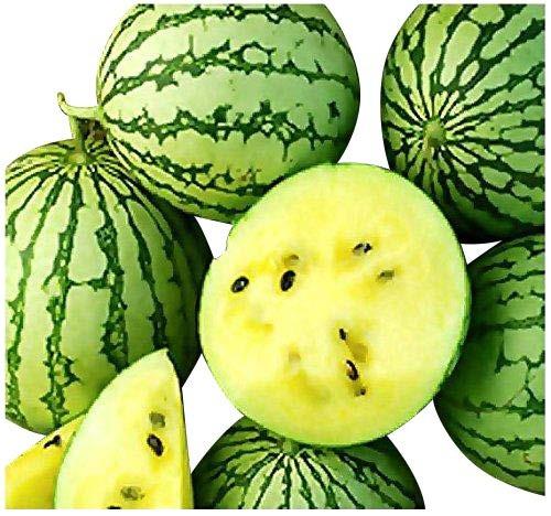 Gelbe Ananas Melone -Wassermelone- 10 Samen