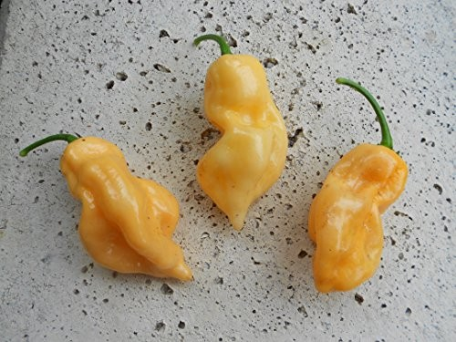 Habanero Peach 10 Samen