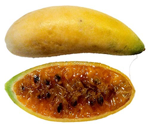 Bananen Passionsfrucht -passiflora mollissima- 10 Samen