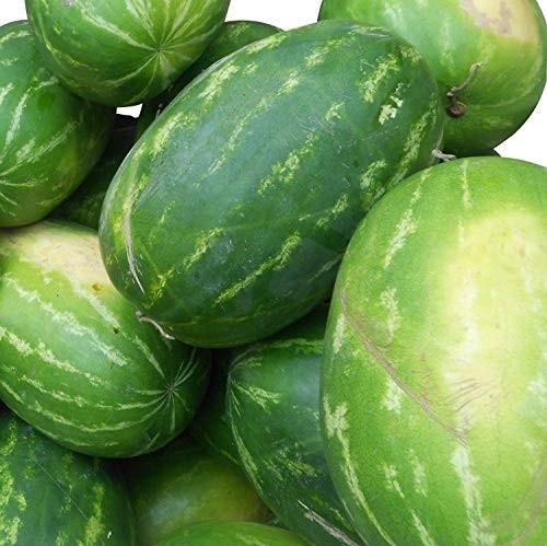 Rießen Wassermelone 10 Samen