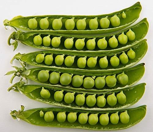 Speiseerbse/Gartenerbse 50 Samen