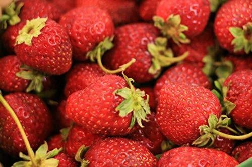 Erdbeere -Four Seasons- 20 Samen