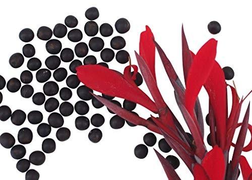Indisches Blumenrohr -Canna indica- 10 Samen
