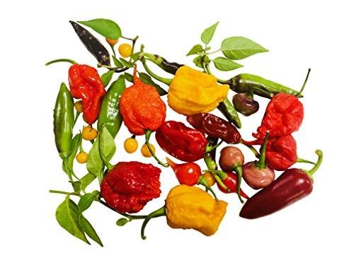 Chili-Samen-Mix  10 Arten zu jeweils 10 Samen (100 Samen)