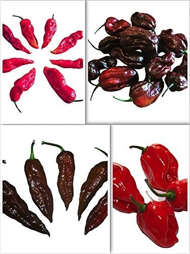 Chili Samen Mix  40 Samen