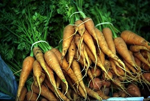 Karotte -Orange- 2.500 samen