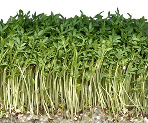 Gartenkresse -Lepidium sativum- 1000 Samen