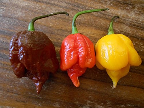 Trinidad Scorpion Chilisamen Mix 30 Samen