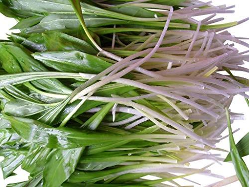 Wald Bärlauch -Allium ursinum- 50 Samen