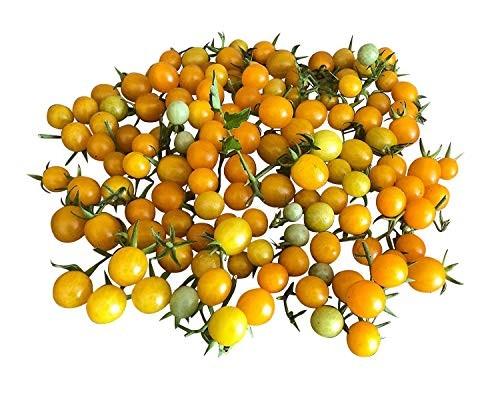 Tomate - Gold Rush Currant- 100 Samen