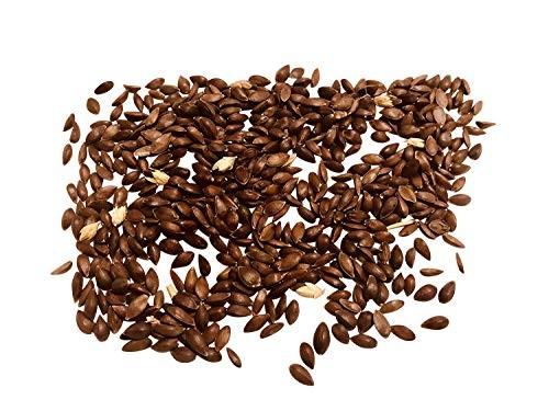 Meerträubel Gewächs -Ephedraceae syn e-viridis- 15 Samen