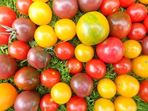 Tomaten Sortiment (3) 100 Samen