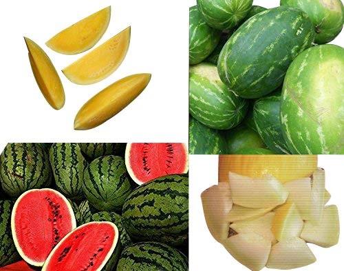 Wassermelonen Melonen Mix 4 Sorten