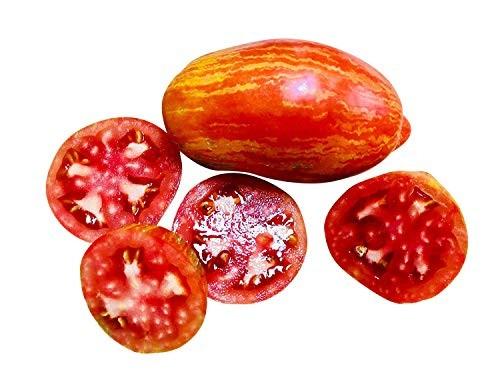 Tomate -Stripped Roman- 10 Samen