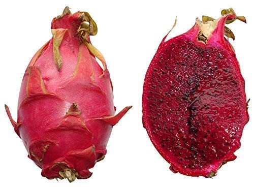 Pitahaya Rotfleischig -Hylocereus monacanthus- 20 Samen