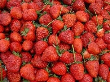 Erdbeere Großfruchtig 1500+ Samen