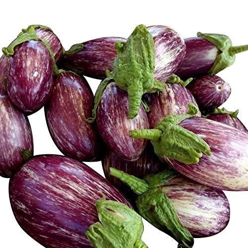Aubergine -Violett-Gestreift- 10 Samen