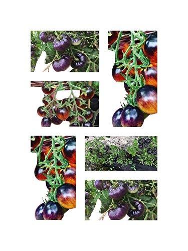 Indigo Tomaten Mix  25 Samen