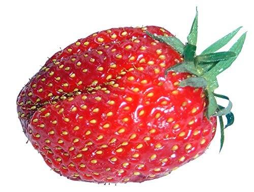 Erdbeeren Großfruchtig 20+ Samen