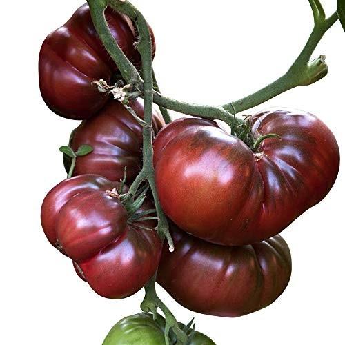Fleisch Tomate - Black Krim 10 Samen