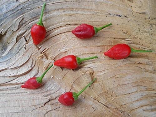 Inca Berry 10 Samen