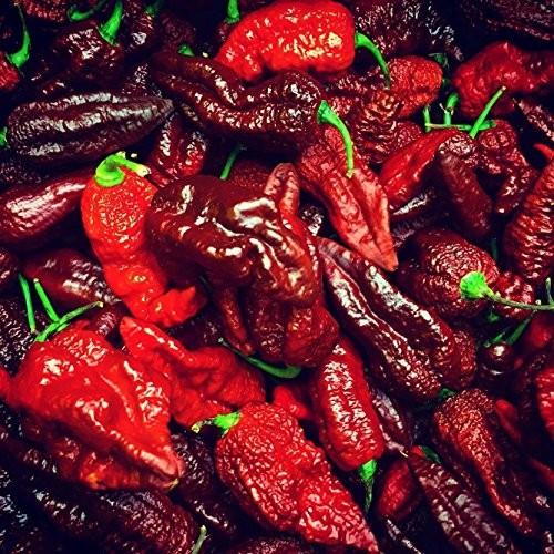 Chili ''Brown Bhutlah'' 10 Samen