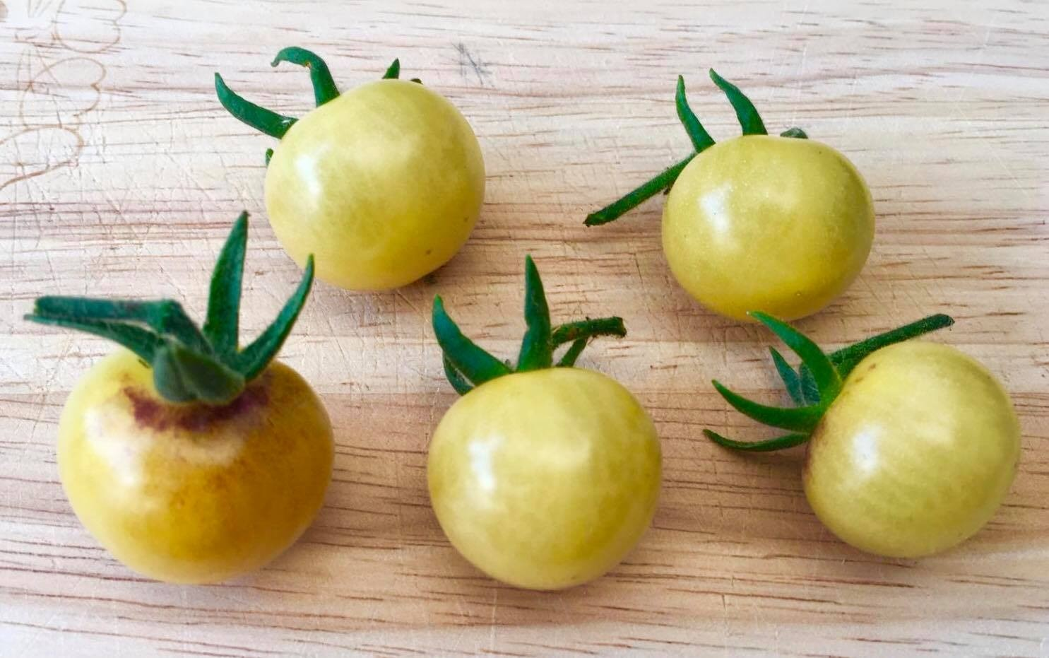 Tomate Antho White 10 Samen
