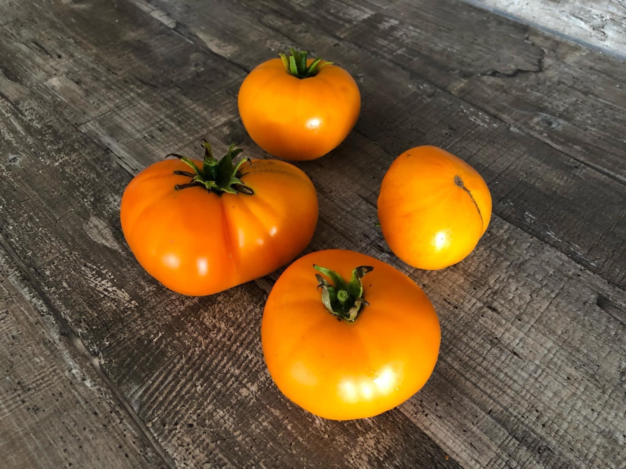 Tomate Apelsin 10 Samen