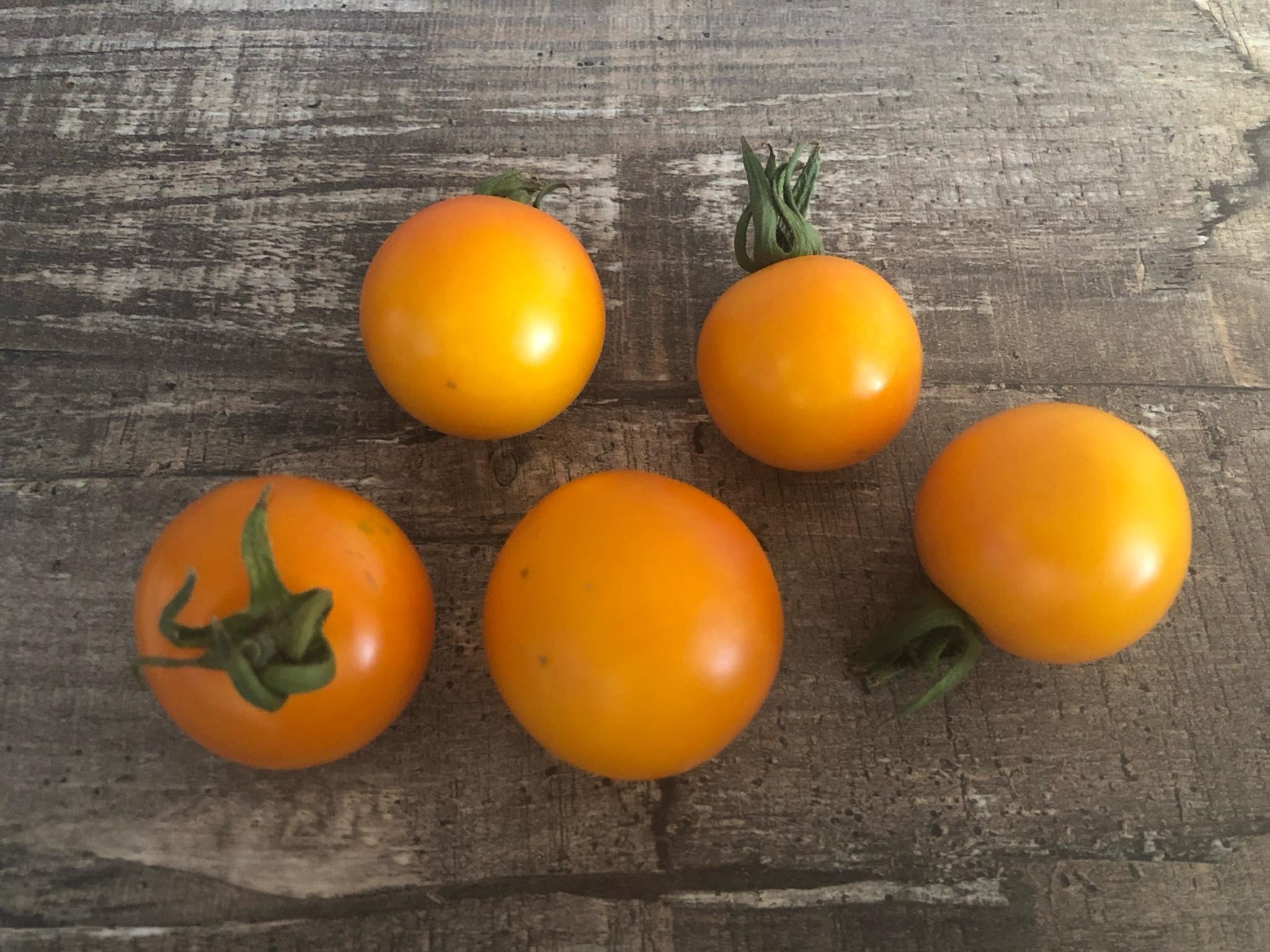 Tomate Blondköpfchen 10 Samen